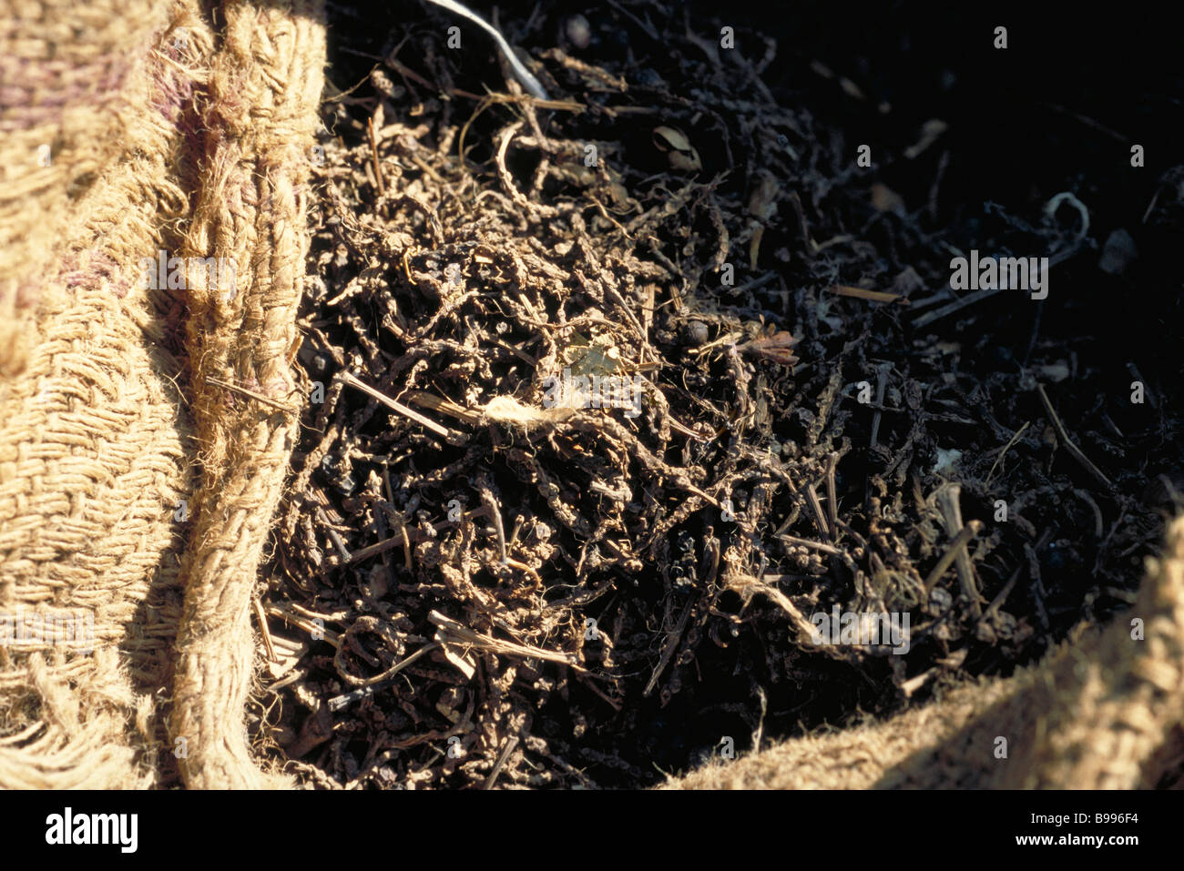 Twigs in burlap bag, close-up - Stock Image