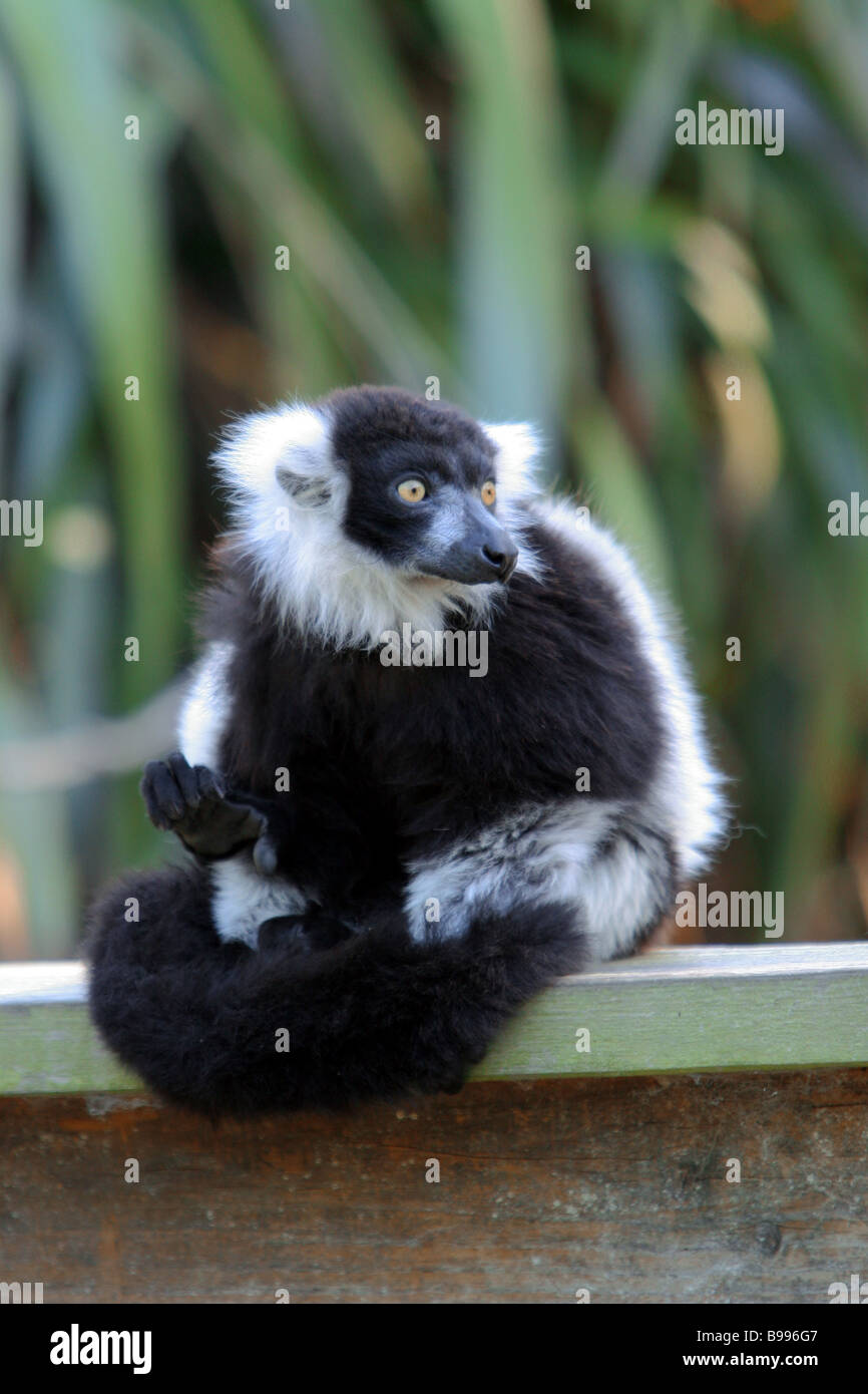 This endearing little creature lives in a New Zealand nature preserve - Stock Image