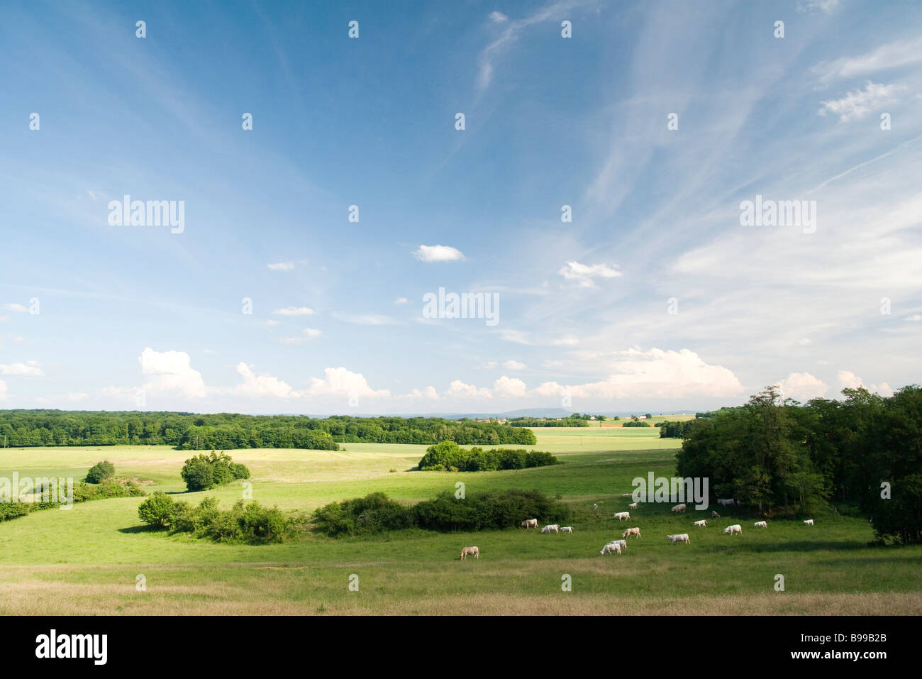 Scenic countryside with cattle grazing in distance - Stock Image
