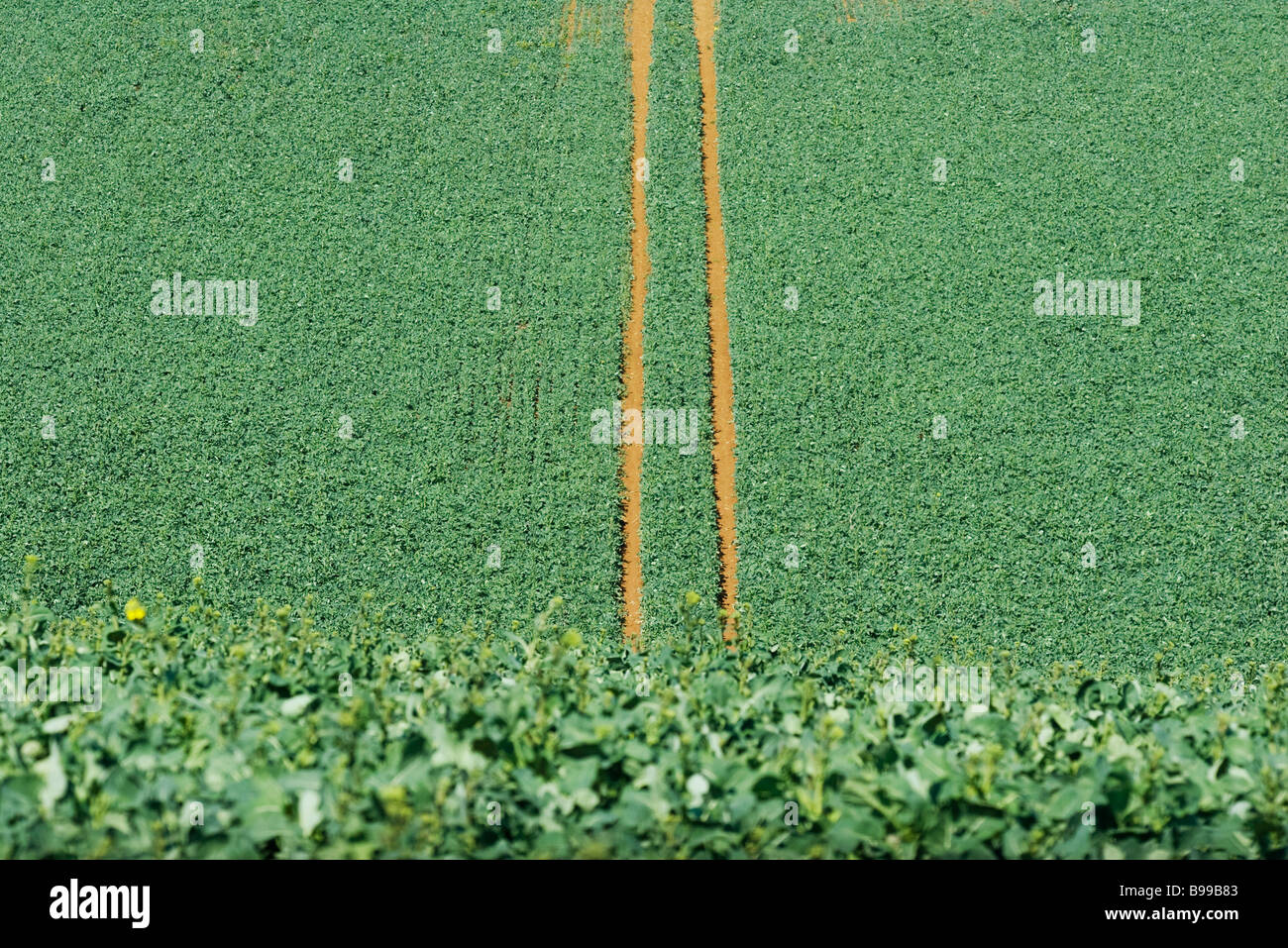 Tire tracks in cultivated field, high angle view - Stock Image