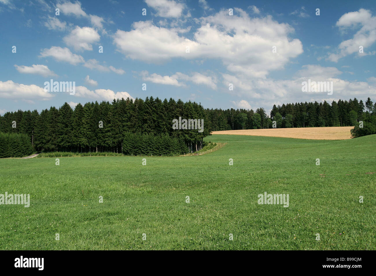 Rural landscape - Stock Image