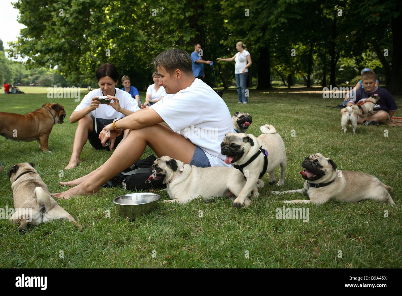 People with their pugs in a park on the Margaret Island in Budapest, Hungary - Stock Image