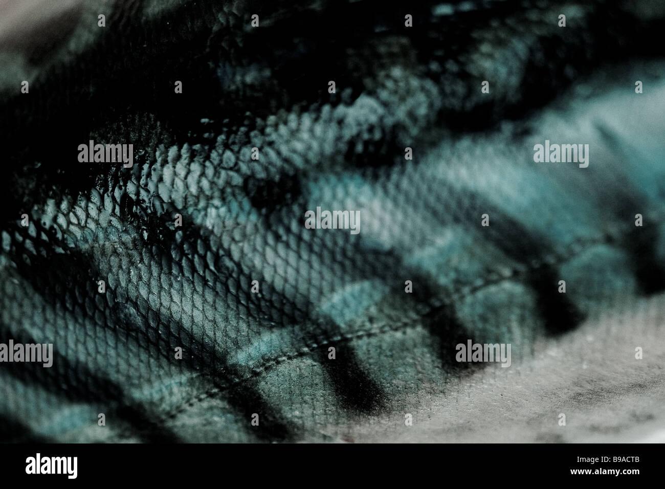 Extreme close up of a mackerel - Stock Image