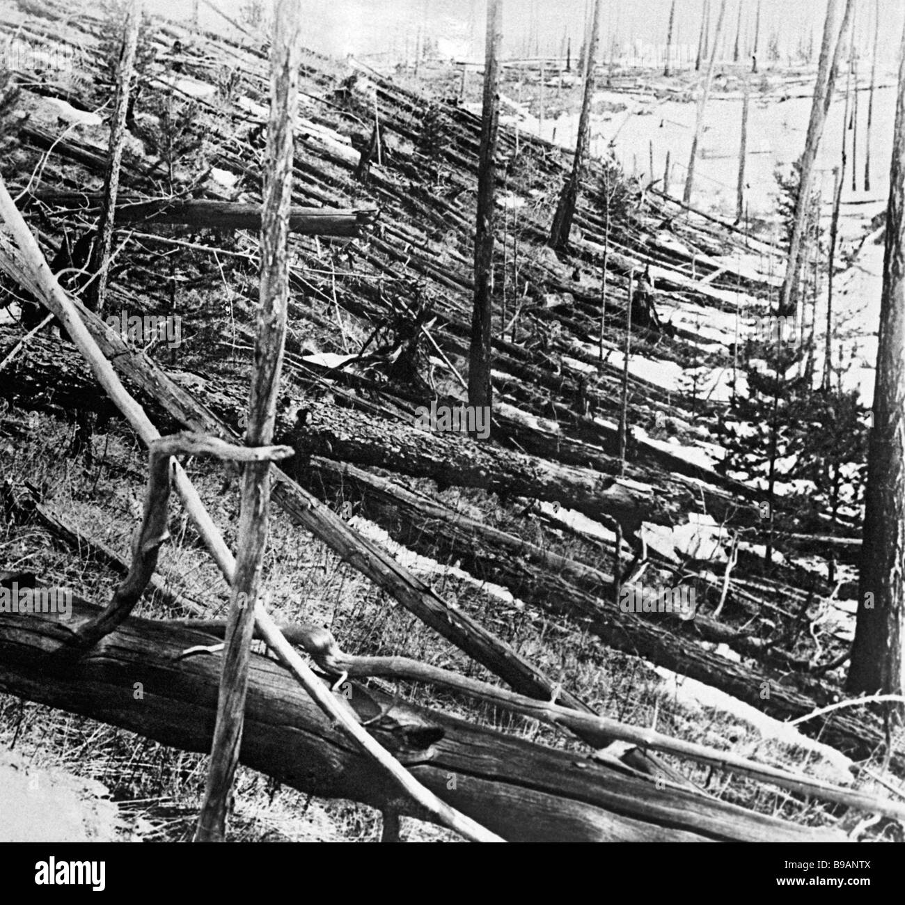 Fallen trees at the site of fall of the Tunguska meteorite which occurred on June 30 1908 on the Podkamennaya Tunguska - Stock Image
