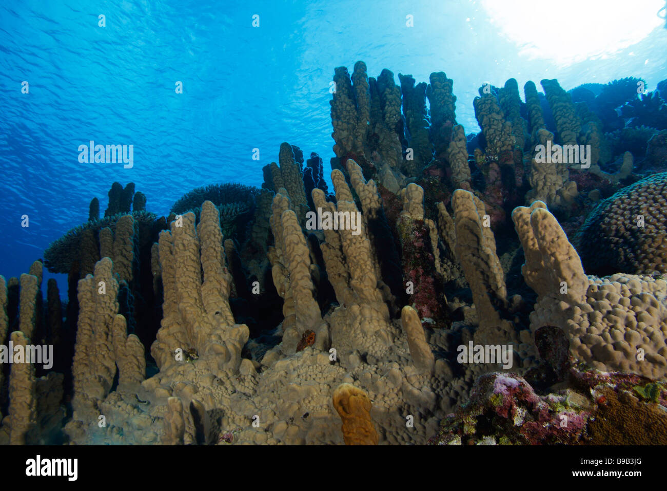 A large reef formation of different types of corals and sponges a large reef formation of different types of corals and sponges sloping from the deep blue up to the sun lit surface of the sea publicscrutiny Gallery