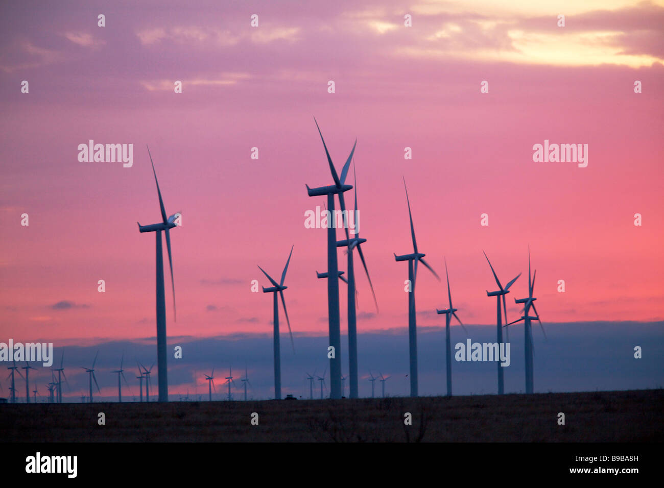 Early morning at the wind turbines generating electrical power at Horse Hollow Wind Farm Nolan county Texas - Stock Image