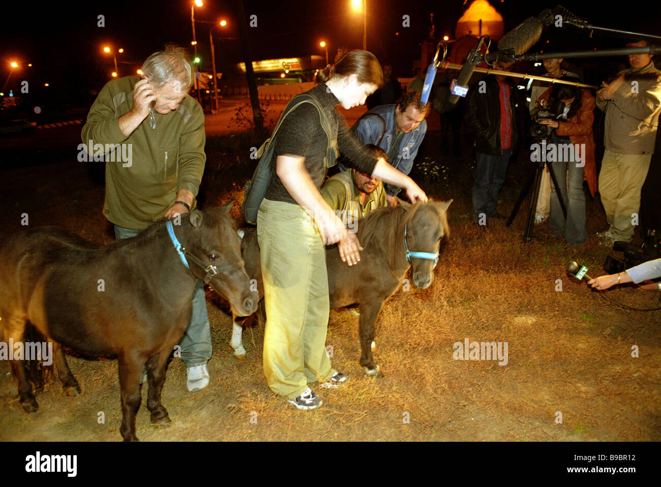 Exotic miniature animals 20 50 cm horses and lamas arrived in Moscow - Stock Image