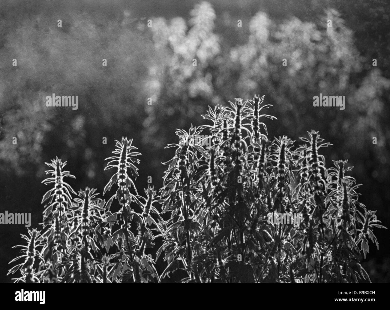 Exotic black and white stock photos images alamy