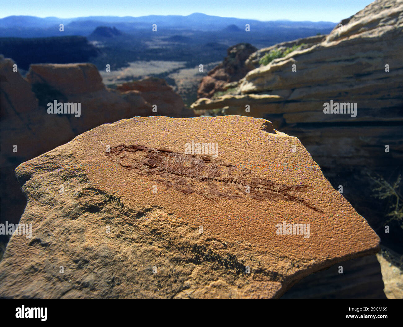 Fossil of a small 4 fish shown in a setting of stratified rock in Arizona - Stock Image