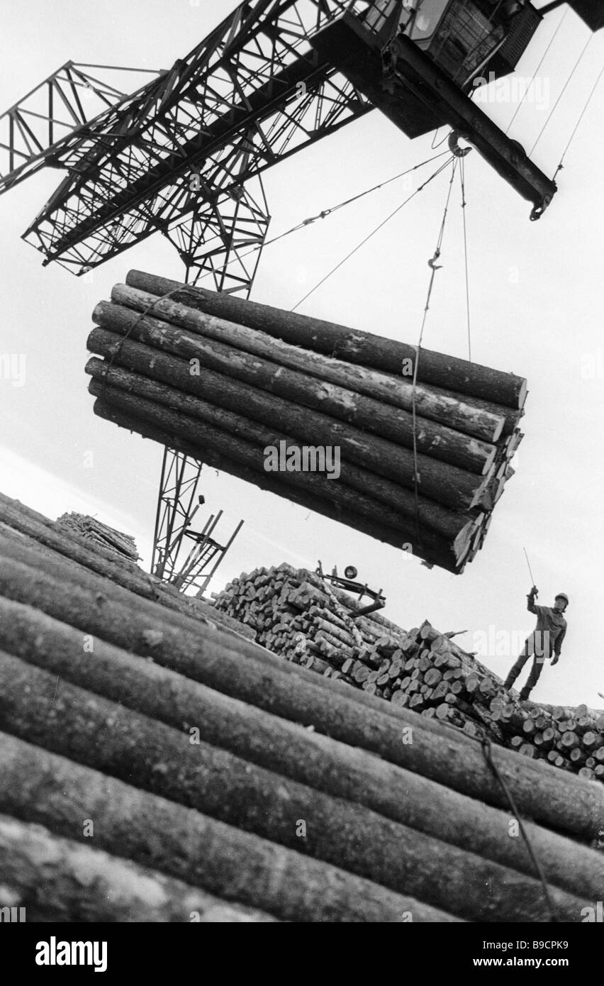 Timber stacked up by Bulgarian loggers before shipping - Stock Image