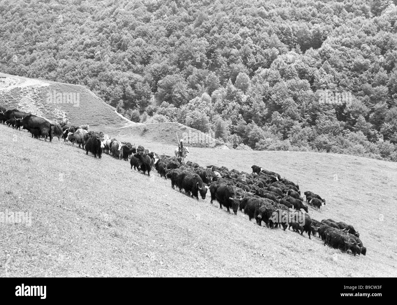 Pastureland in the mountains - Stock Image