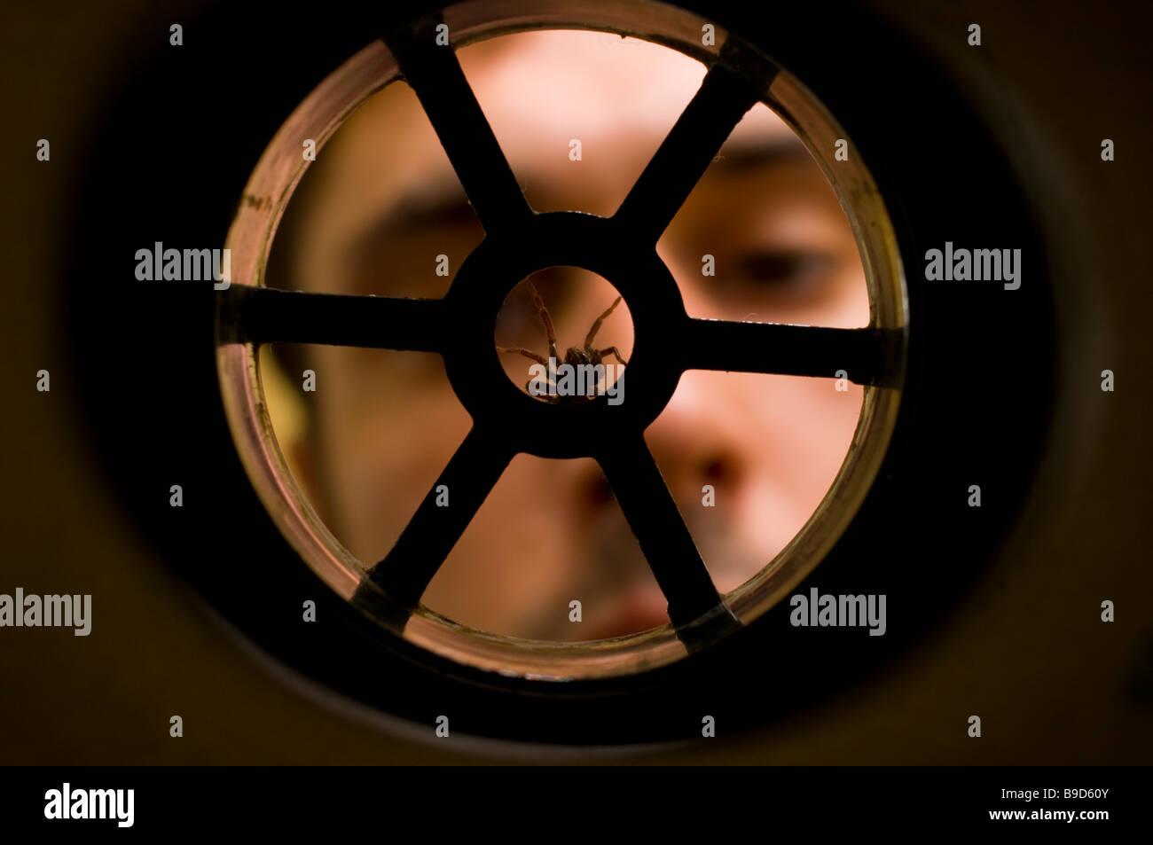 HOUSE SPIDER Tegenaria domestica in plughole - Stock Image