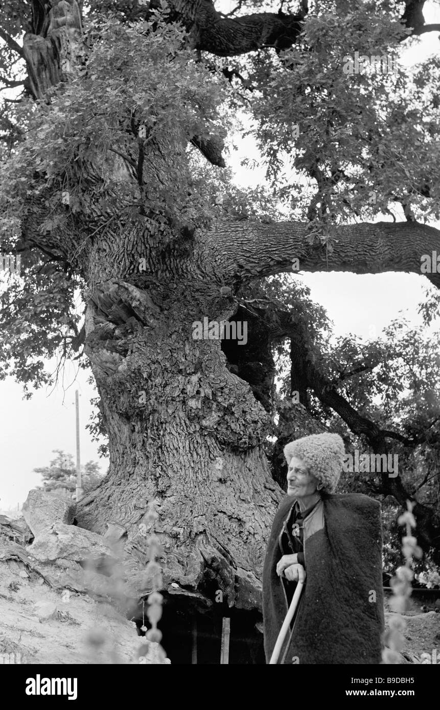 Elderly highlander near thousand year old oak tree growing at Dilizhan state nature preserve - Stock Image