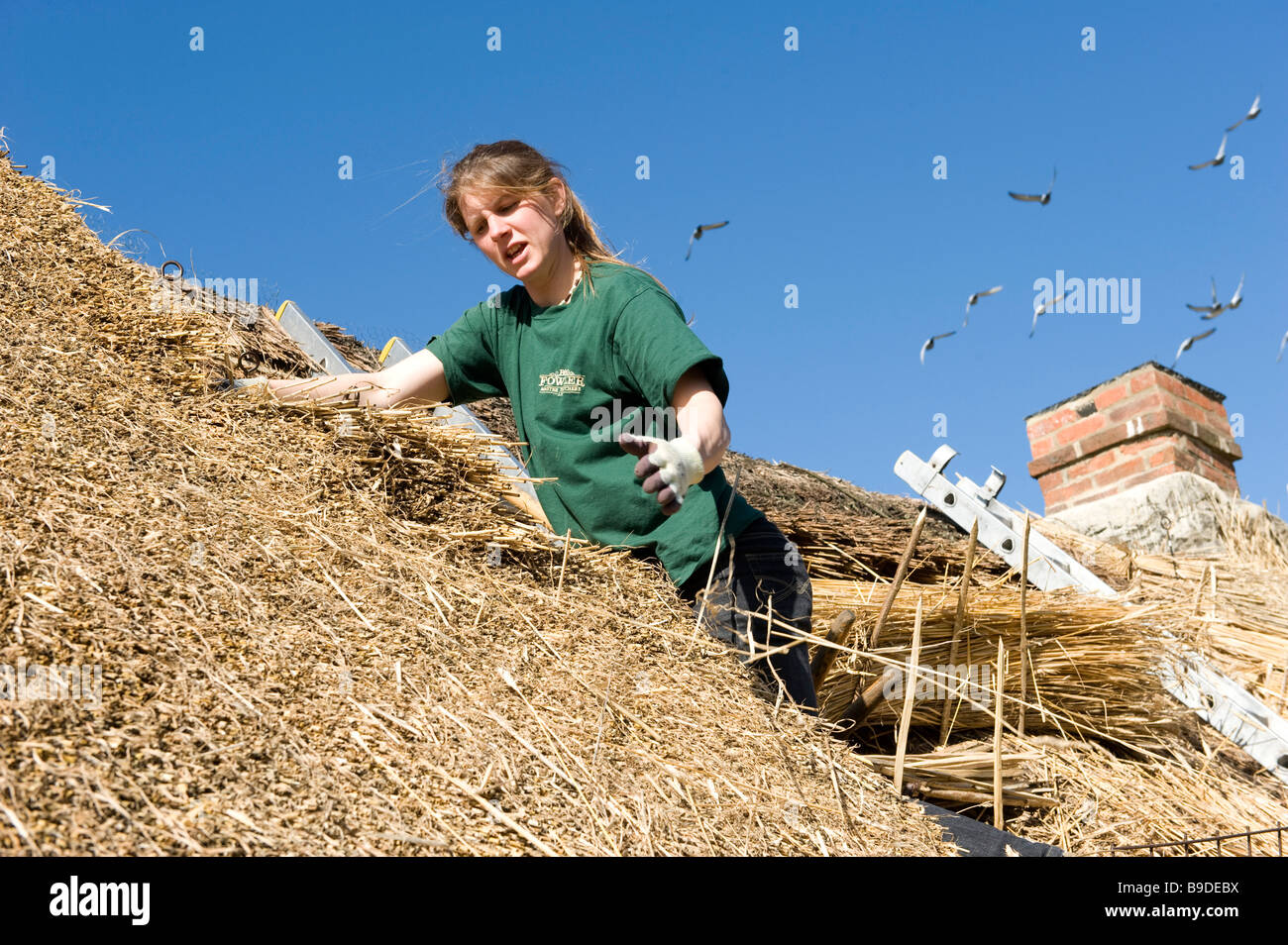 A lady thatcher at work on an Oxfordshire roof with straw - Stock Image