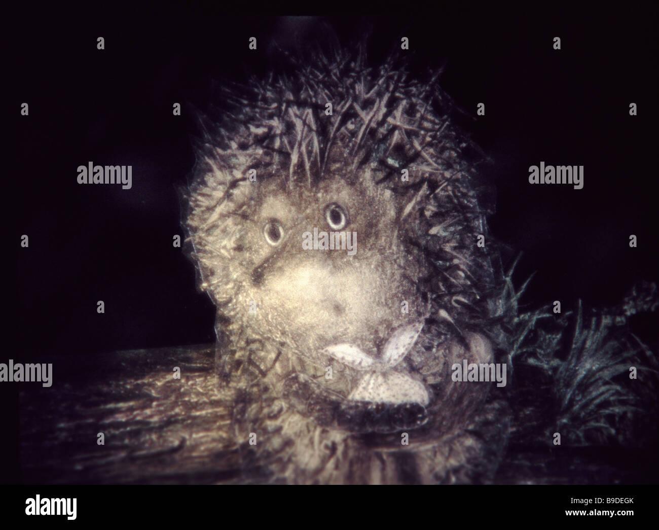 Hedgehog cartoon stock photos & hedgehog cartoon stock images alamy