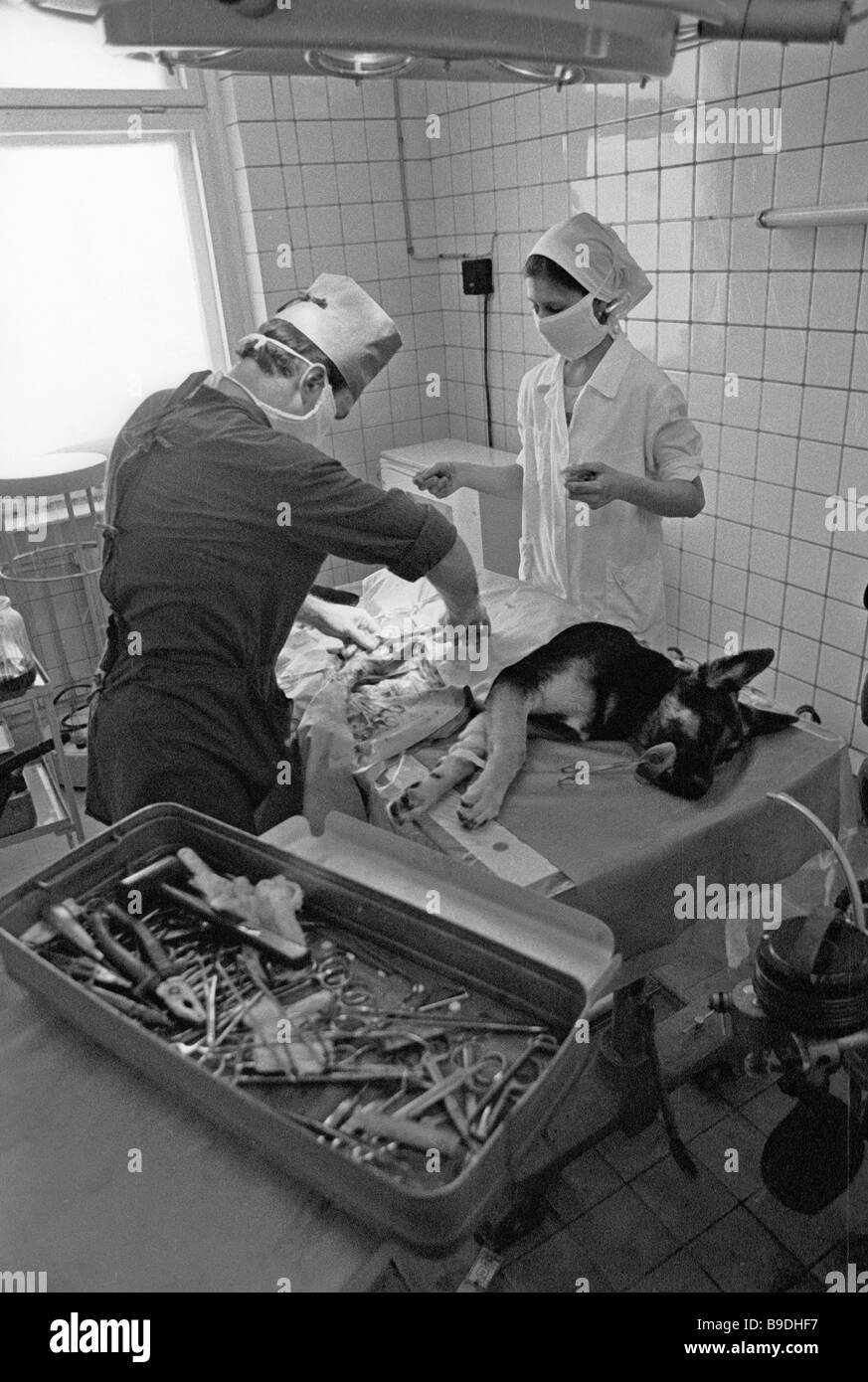 Veterinary surgeons operating on a sheep dog in a Moscow clinic Stock Photo