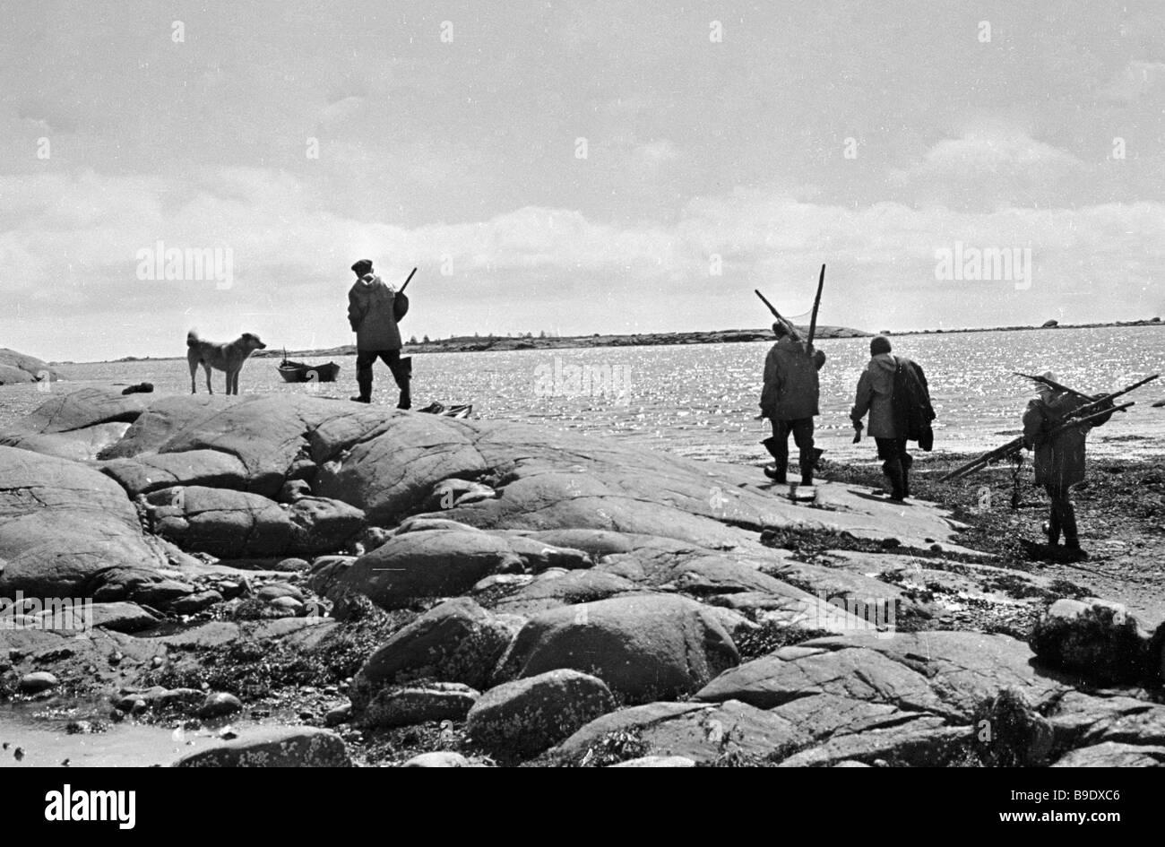 A team of fishermen harvesting seaweed on the White Sea coast - Stock Image