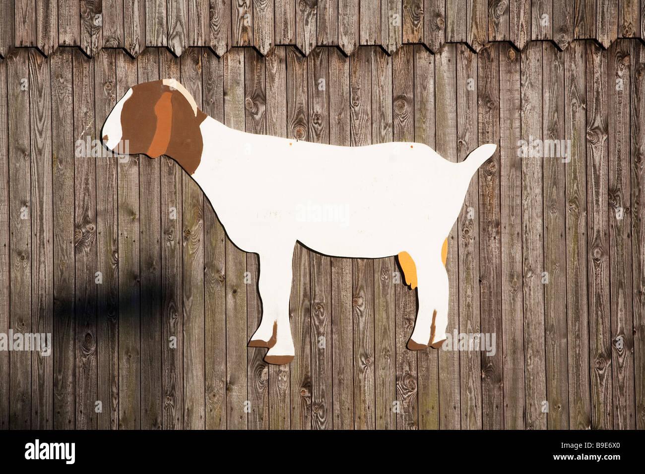 Denmark Zealand Møn island farm goat - Stock Image