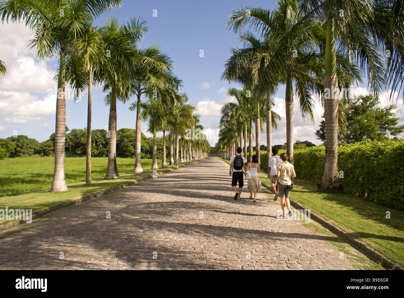 Road to Brennand Institute. Recife, Pernambuco, Brazil. - Stock Image