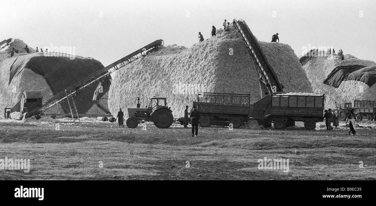 Loading cotton into the storing bunkers Geokchaisky district - Stock Image