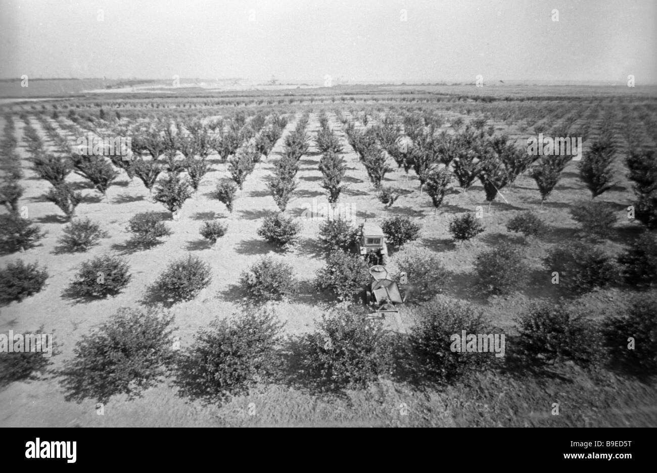 Garden on re cultivated land which was until recently the site of dumping rock of manganese ores mined and dressed - Stock Image