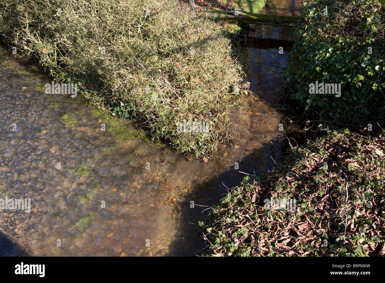 Confluence of two small streams - Stock Image
