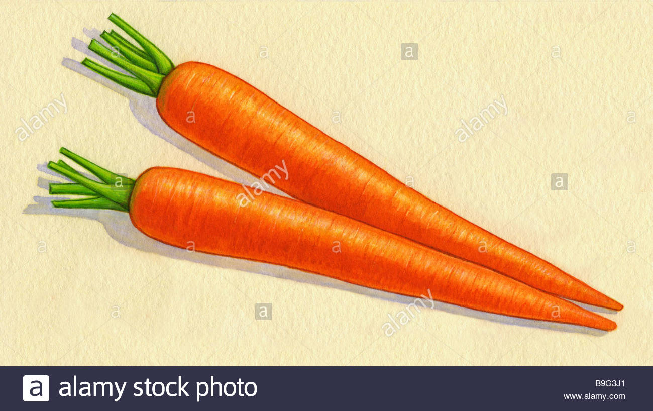 Carrots in Watercolor - Stock Image