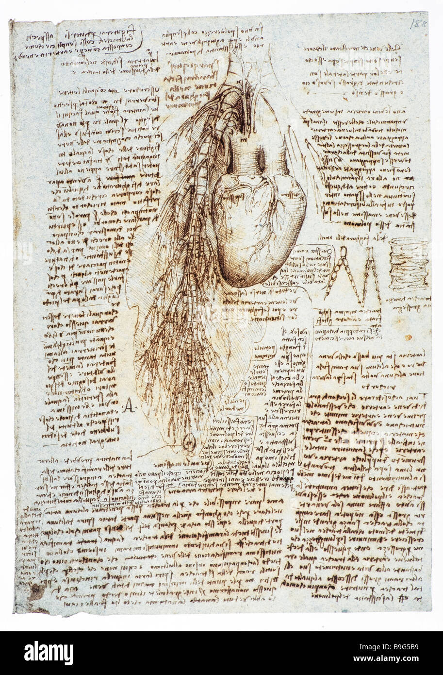 anatomical drawing of lungs and heart by Leonardo da Vinci  1513 - Stock Image