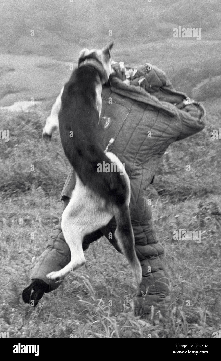 Patrol dog detains trespasser of the border at a training - Stock Image