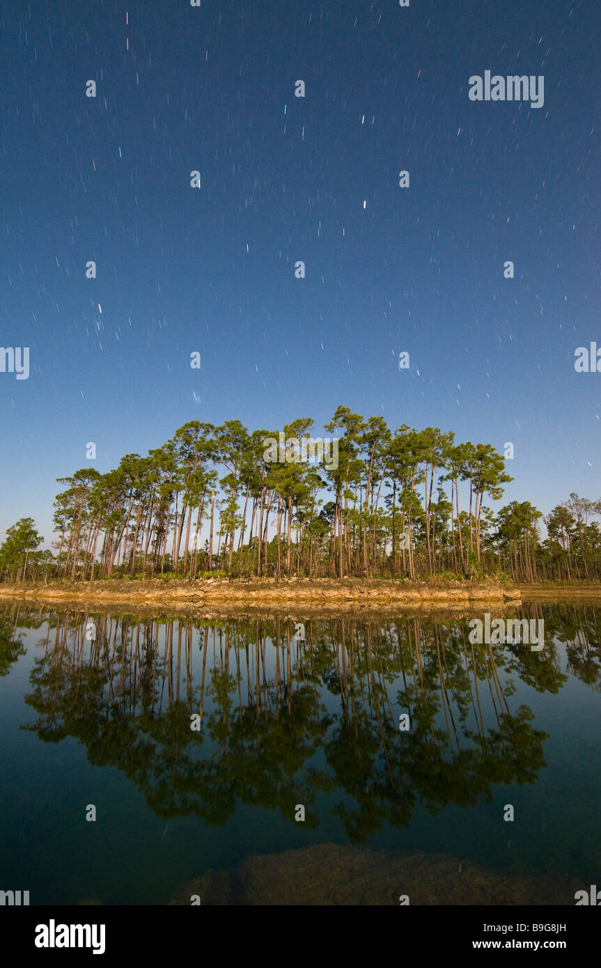 Time exposure under full moon captures star trails above pine forest Everglades National Park Florida Stock Photo