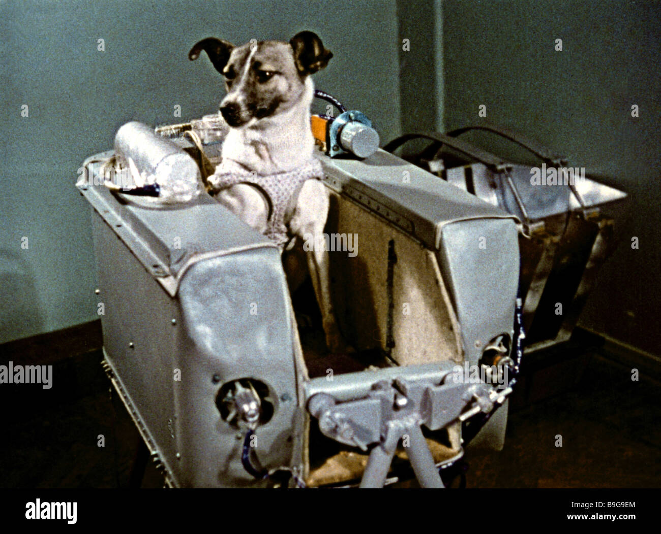 A dog named Laika aboard the second Earth orbiting satellite A still from  the documentary film