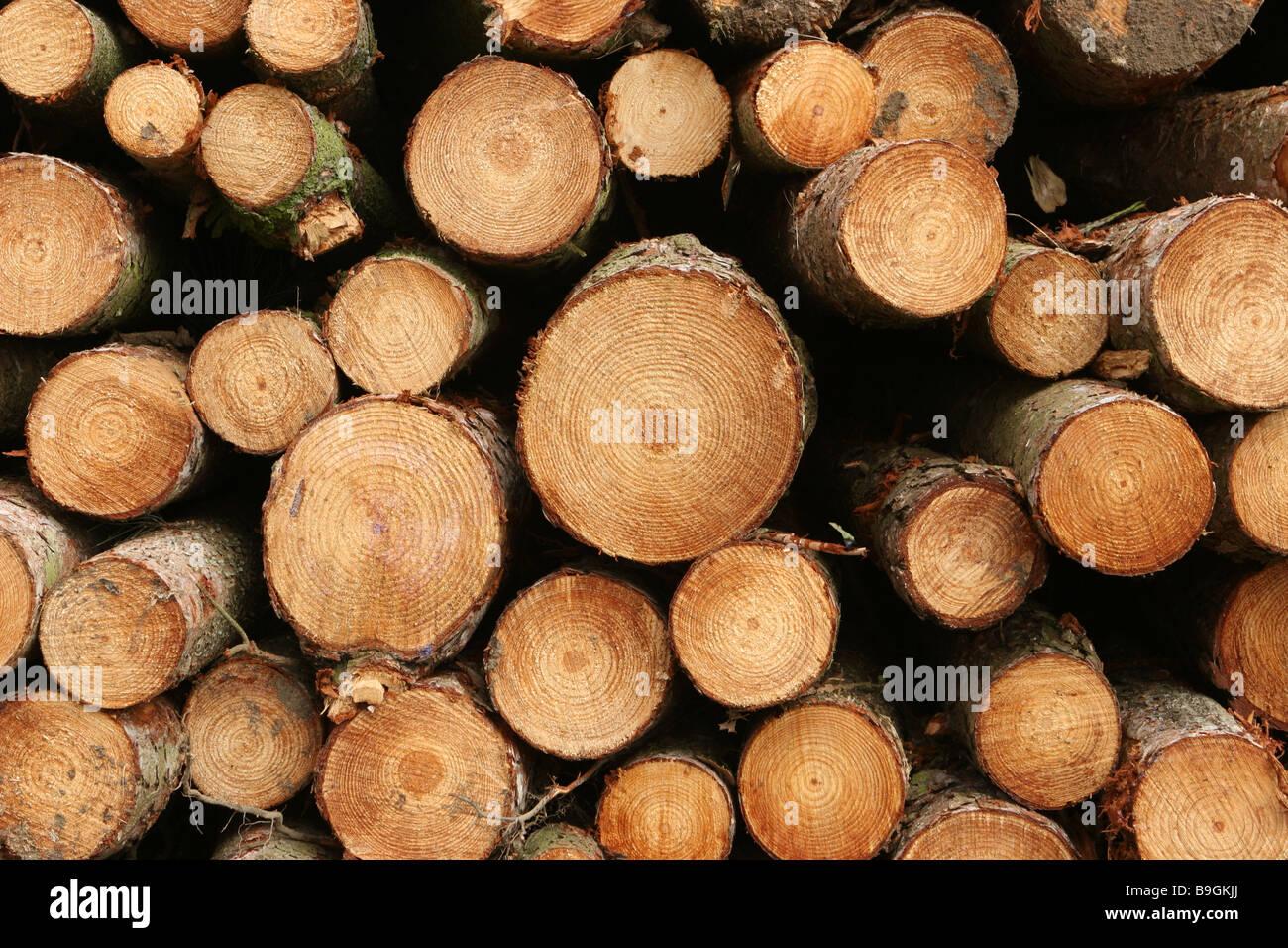 Cut Wooden Logs - Stock Image