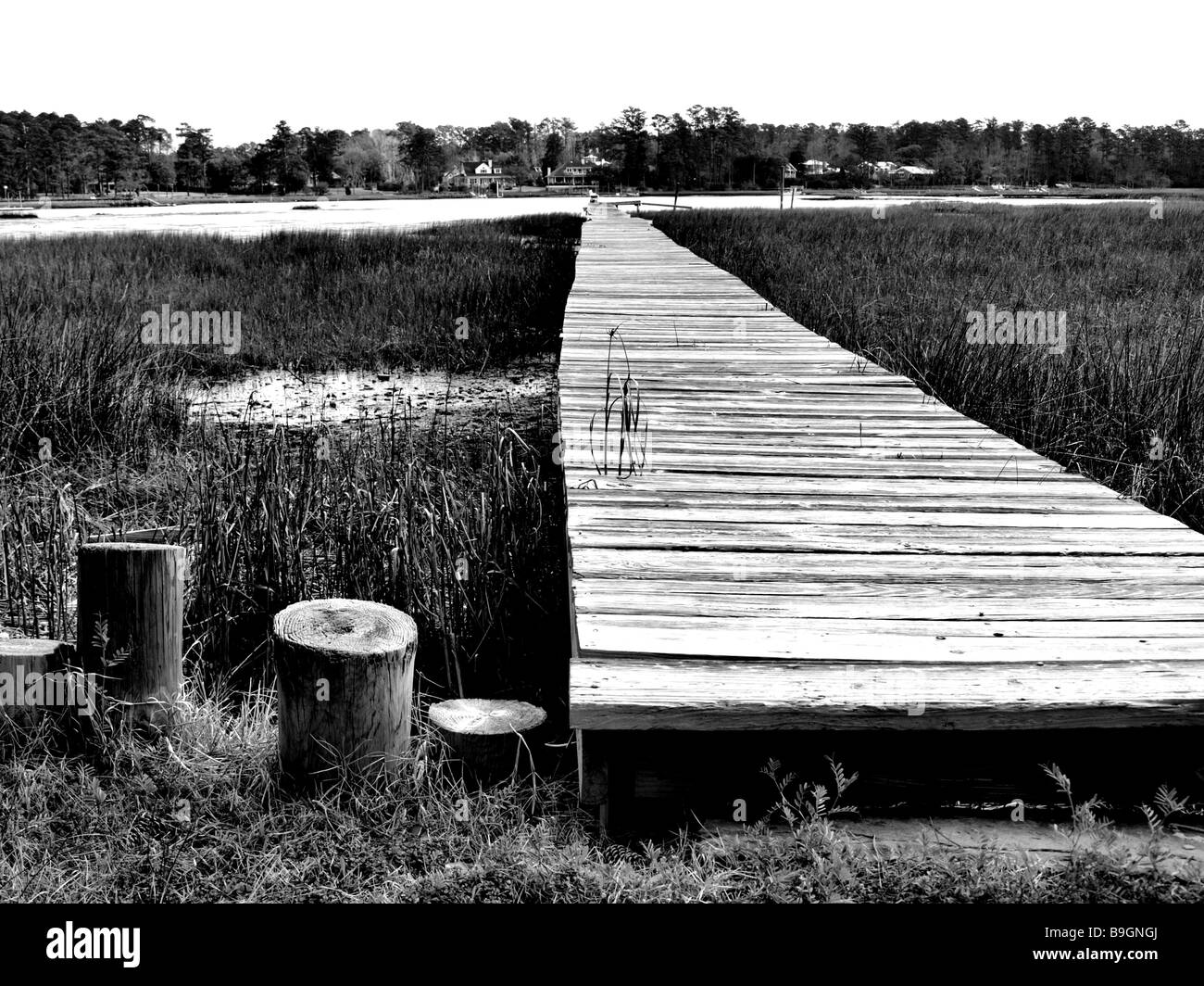 black and white panoramic view of marsh river and boat dock low perspective with details of grass wooden planks - Stock Image