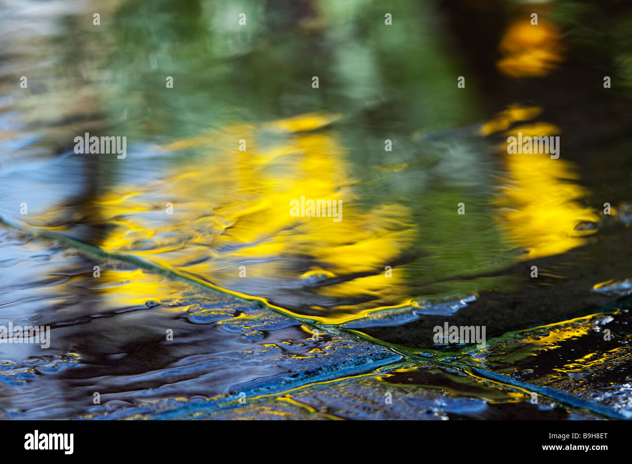Water on garden paving slabs with reflections of daffodil flowers abstract Stock Photo