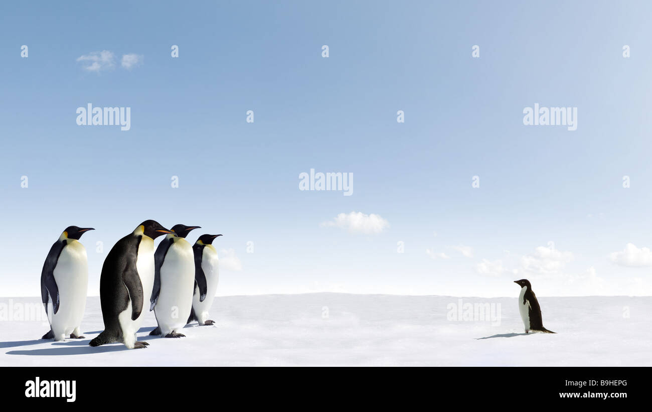 Adelie penguins faces a group of Emperor penguins - Stock Image