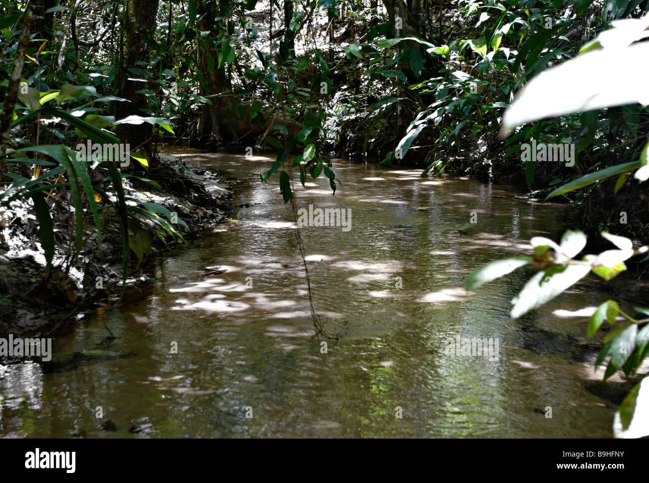 Stream in Ecoparque de Una Atlantic Rainforest Mata Atlântica Bahia Brazil South America - Stock Image