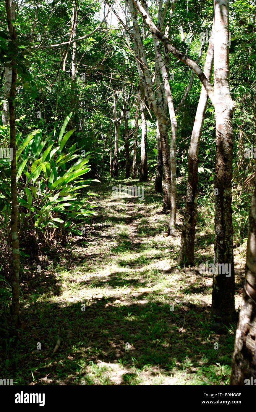 Atlantic Rainforest Mata Atlântica Ecoparque de Una Bahia Brazil South America - Stock Image