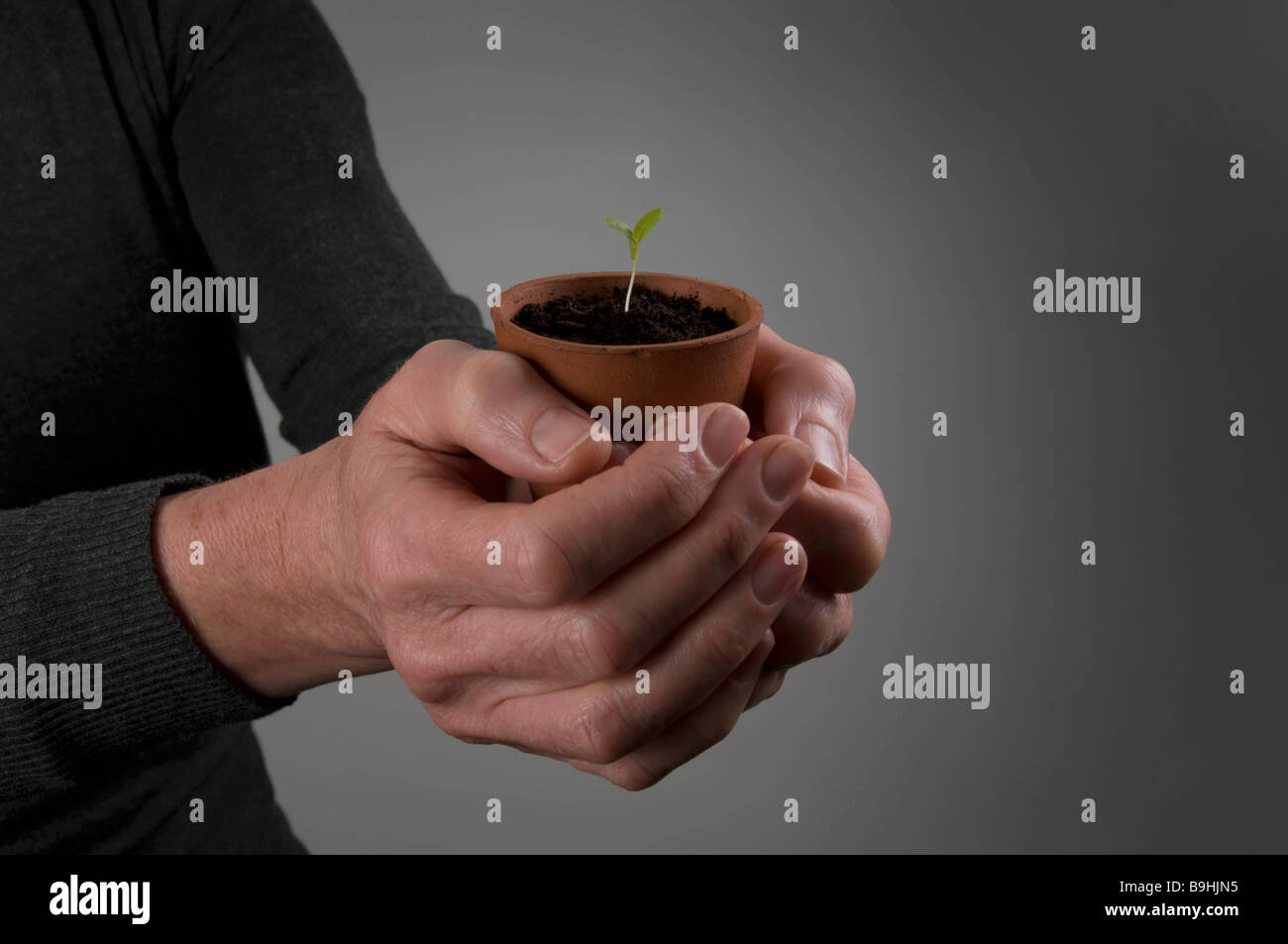 Female hands holding a seedling - Stock Image