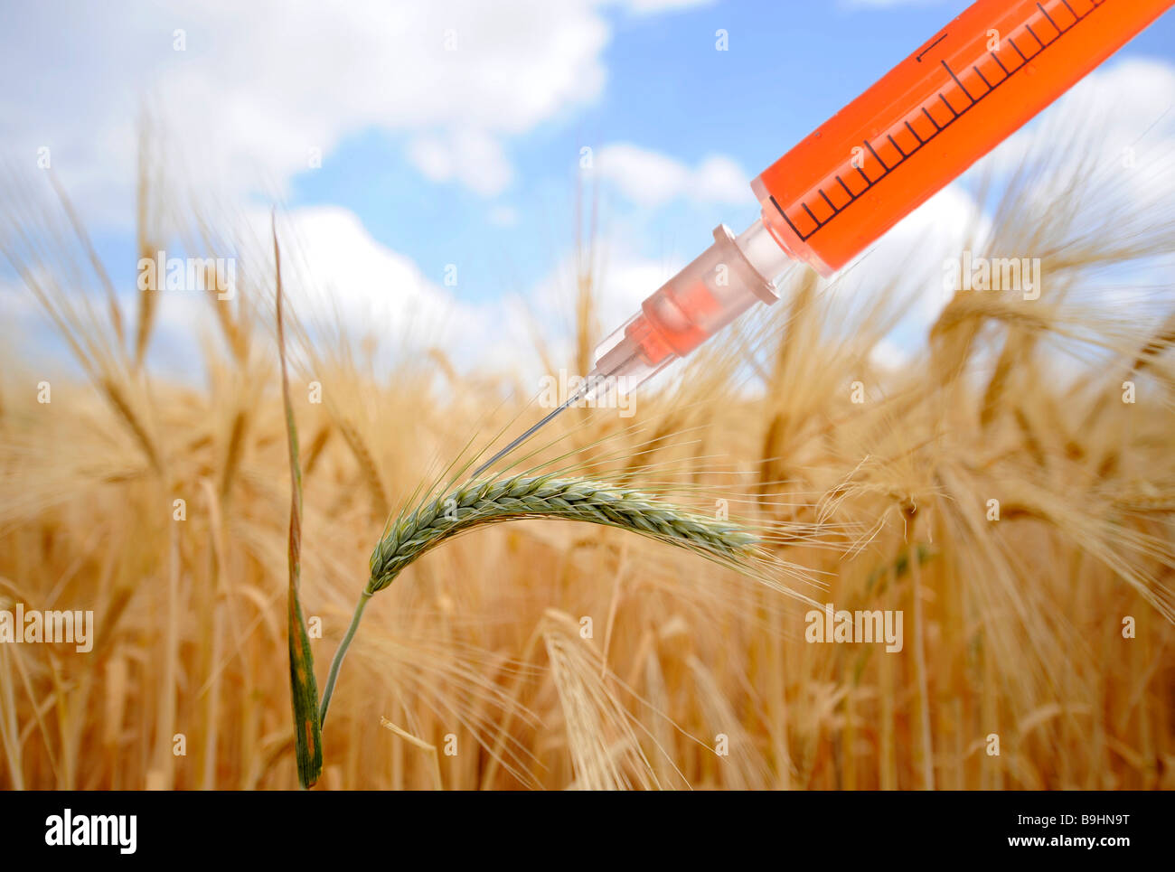 Symbol For Genetically Modified Food Stock Photos & Symbol