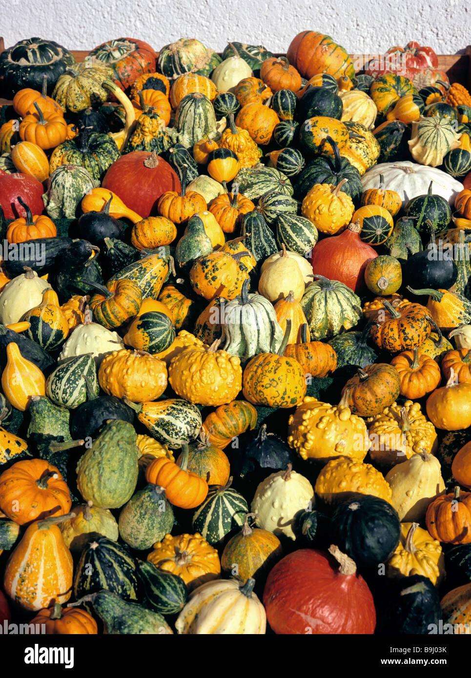 Cucurbitas (Cucurbita), different marrows and squashes, pumpkins, market, autumn - Stock Image