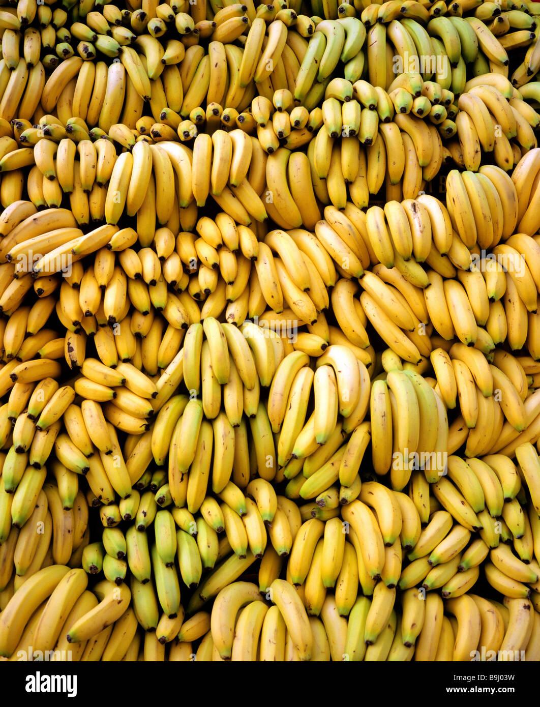 Banana (Musa × paradisiaca), pile of bananas - Stock Image