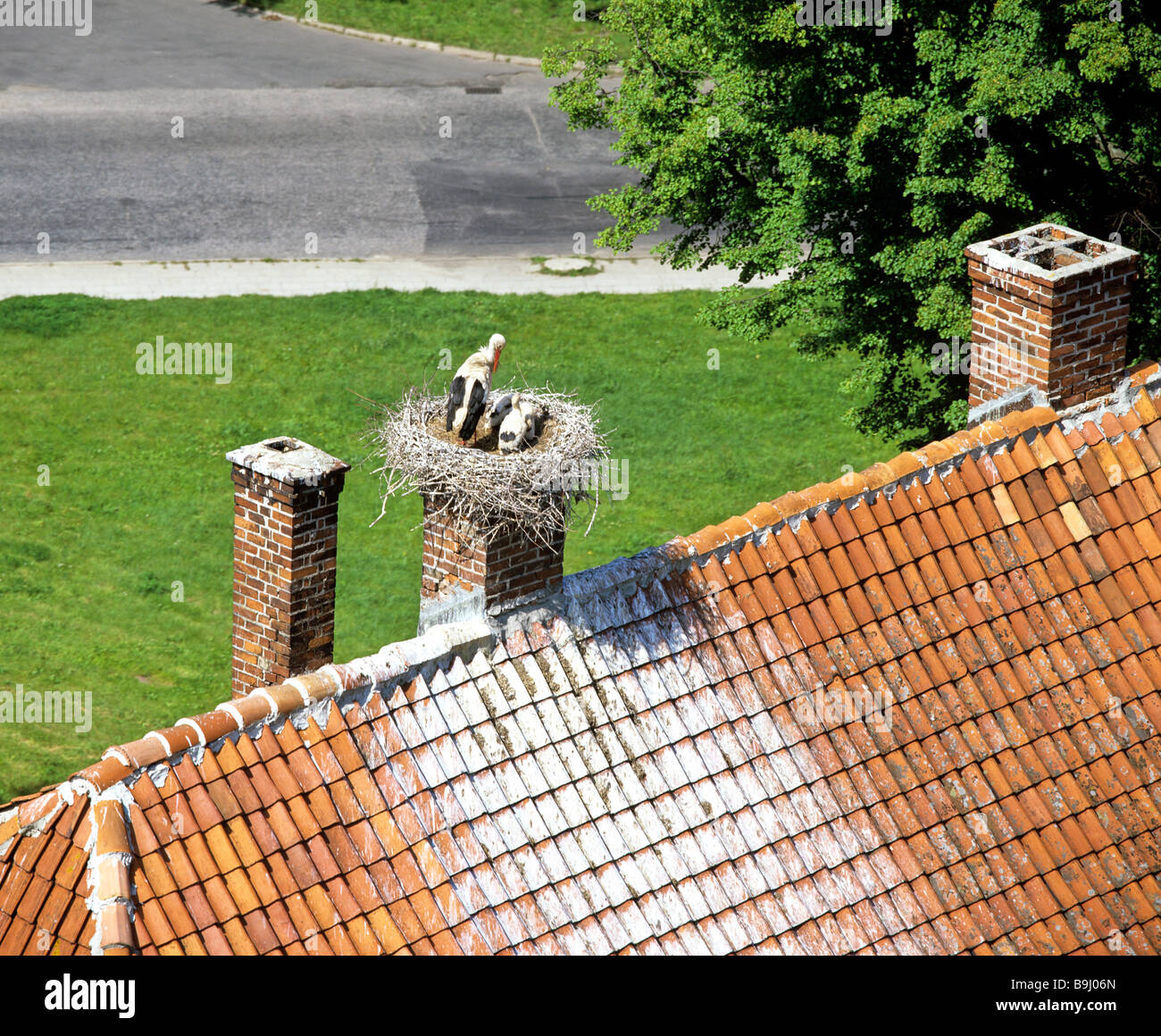 White Stork (Ciconia ciconia) with young, stork nest on a chimney, roof Stock Photo