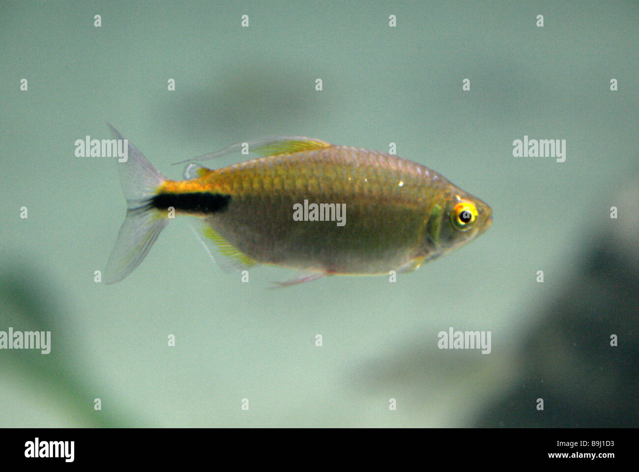 Tropical Fish - Stock Image