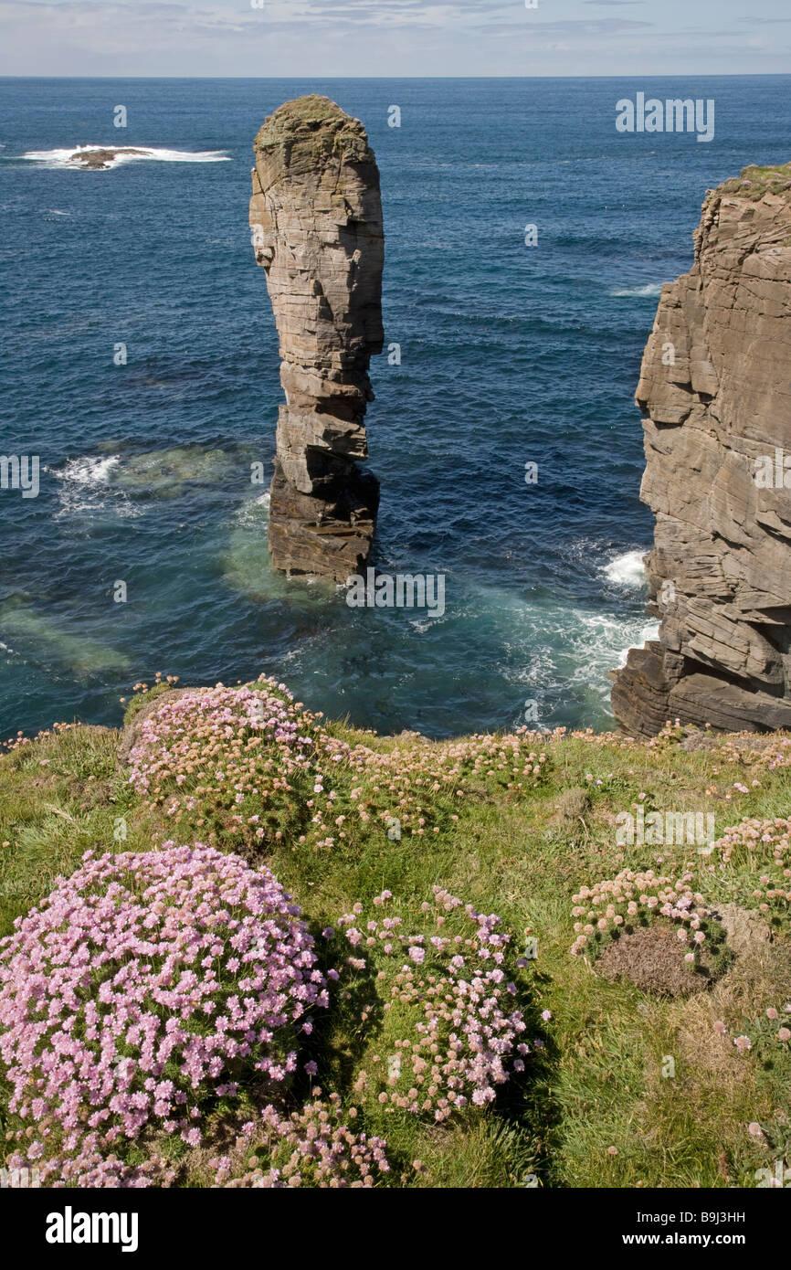 yesnaby castle seastack orkney - Stock Image