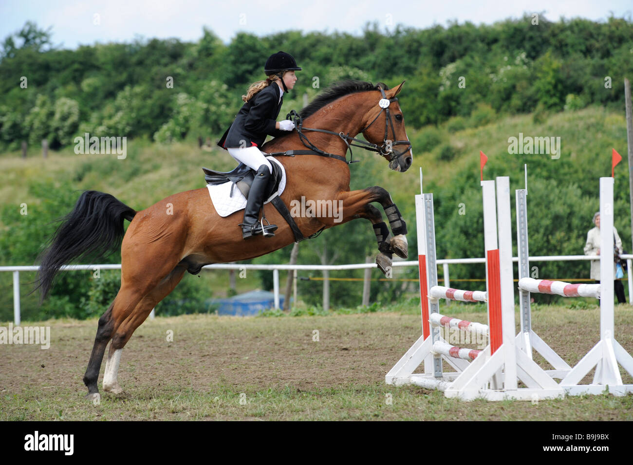 Horse jumping over obstacle, show jumping, Tournament Buttstaedt, Thuringia, Germany, Europe - Stock Image