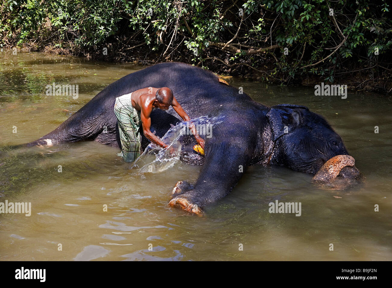 Sri Lanka River Man Elephant Asia Washes South Asia People