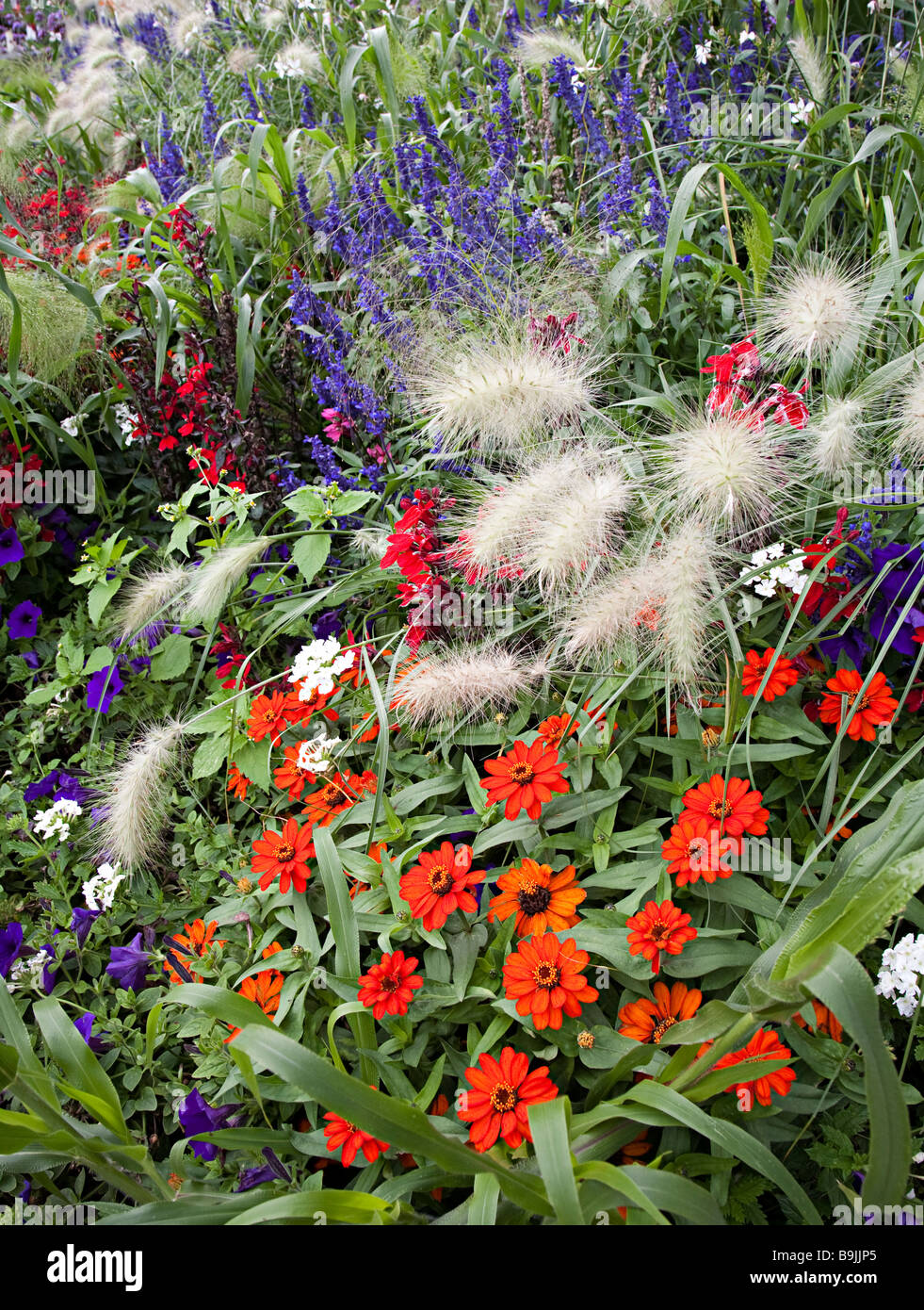 Mixed flowers in herbaceous border Germany - Stock Image