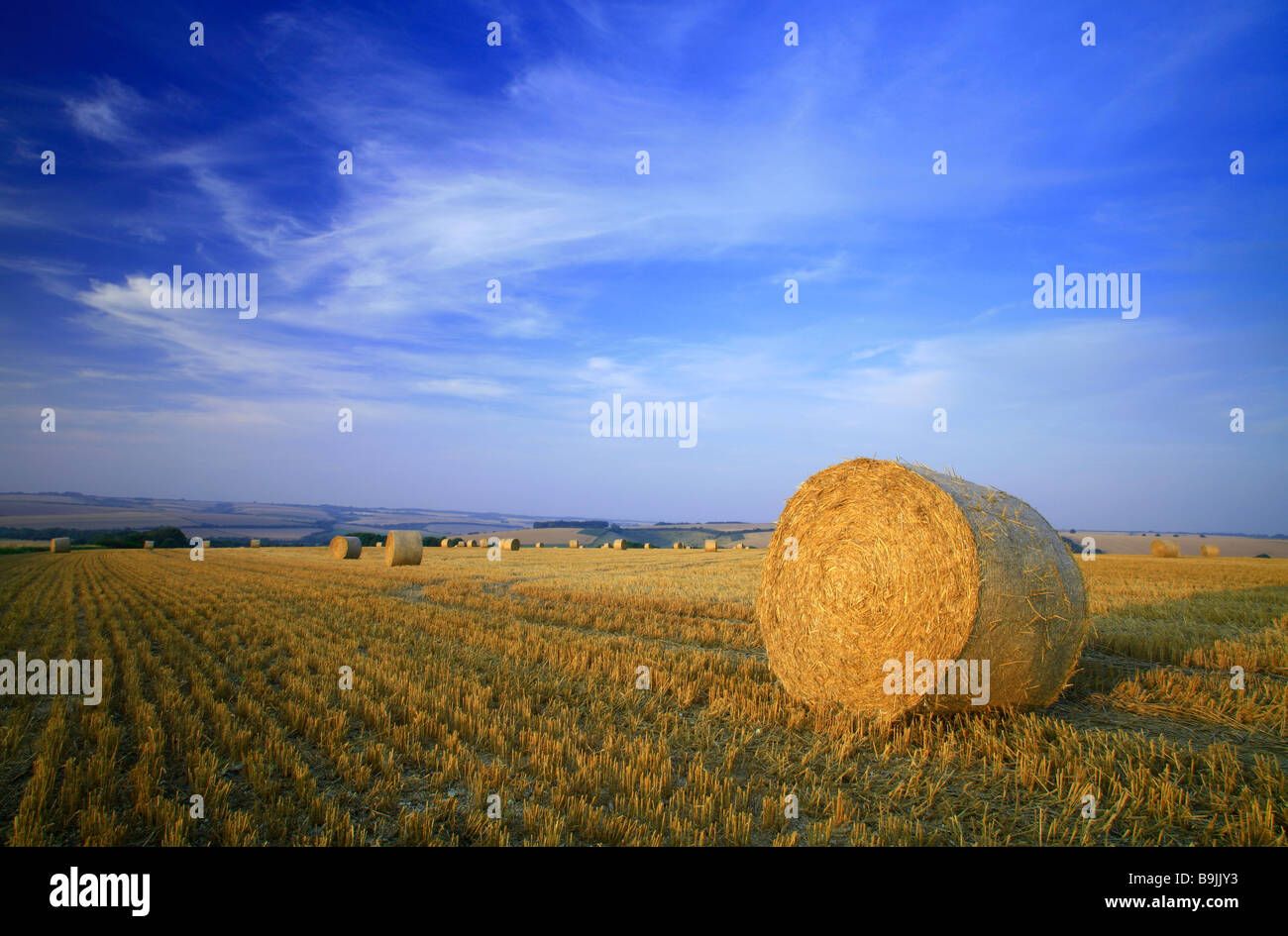 A bale of straw in a field of stubble after harvest with blue sky and summer clouds - Stock Image