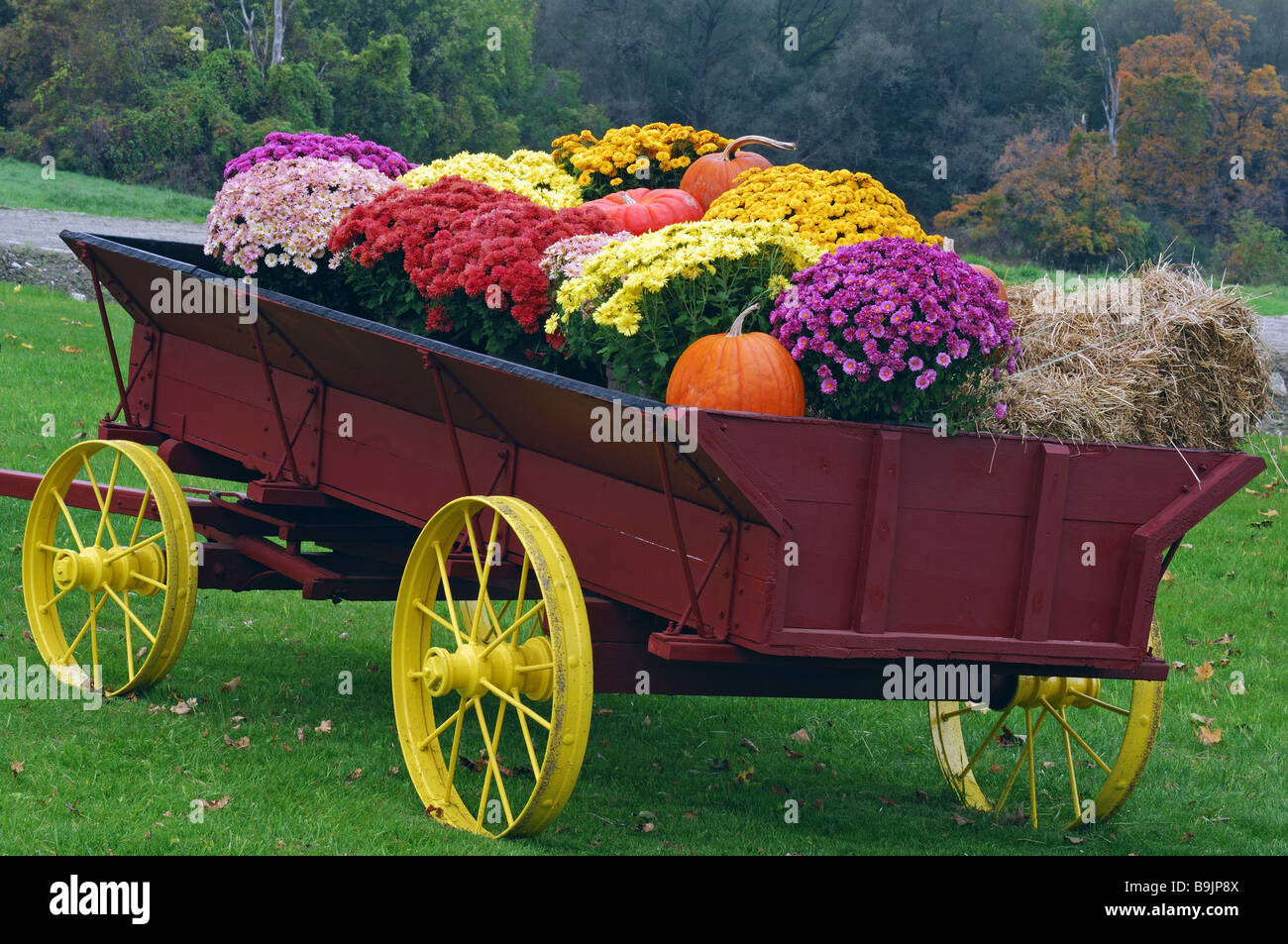 Цветы из тачки