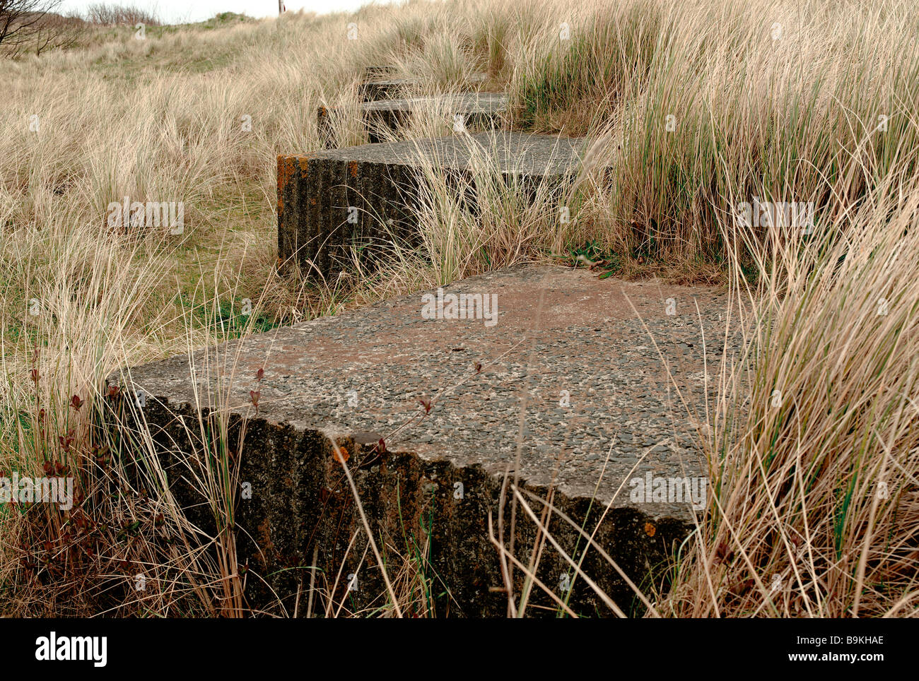 Wartime anti-tank defenses in dunes at Alnmouth - Stock Image